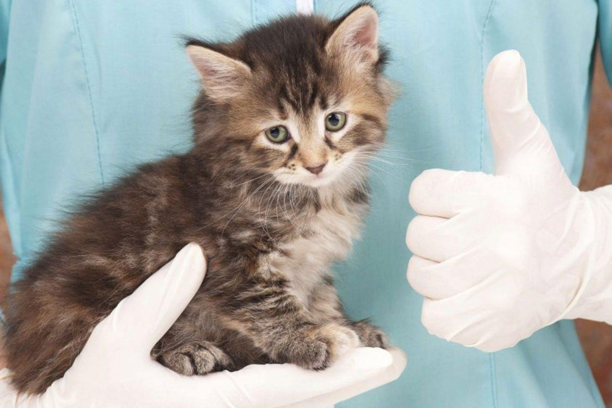 Akcija sterilizacije mačaka s 50% popusta
